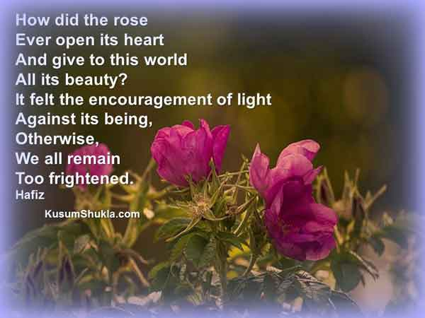 Hafiz quote about roses